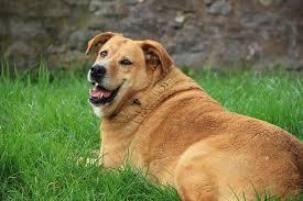 Feeding Human Food To Dogs
