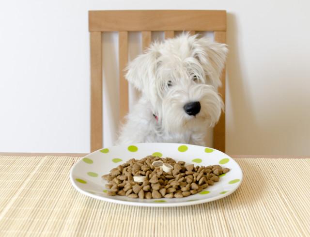 Dog Feeding Guidelines