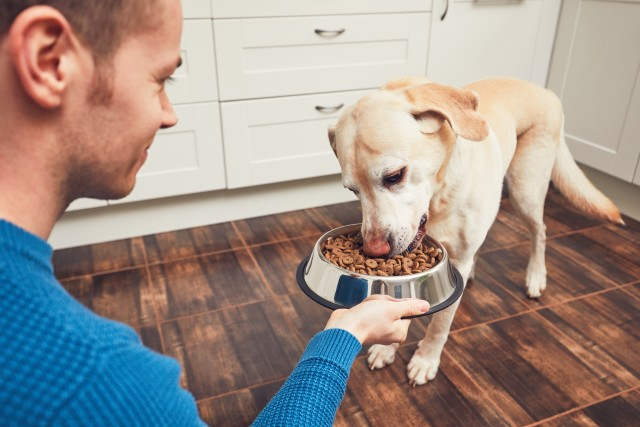Which Dog Food is Best For My Dog?